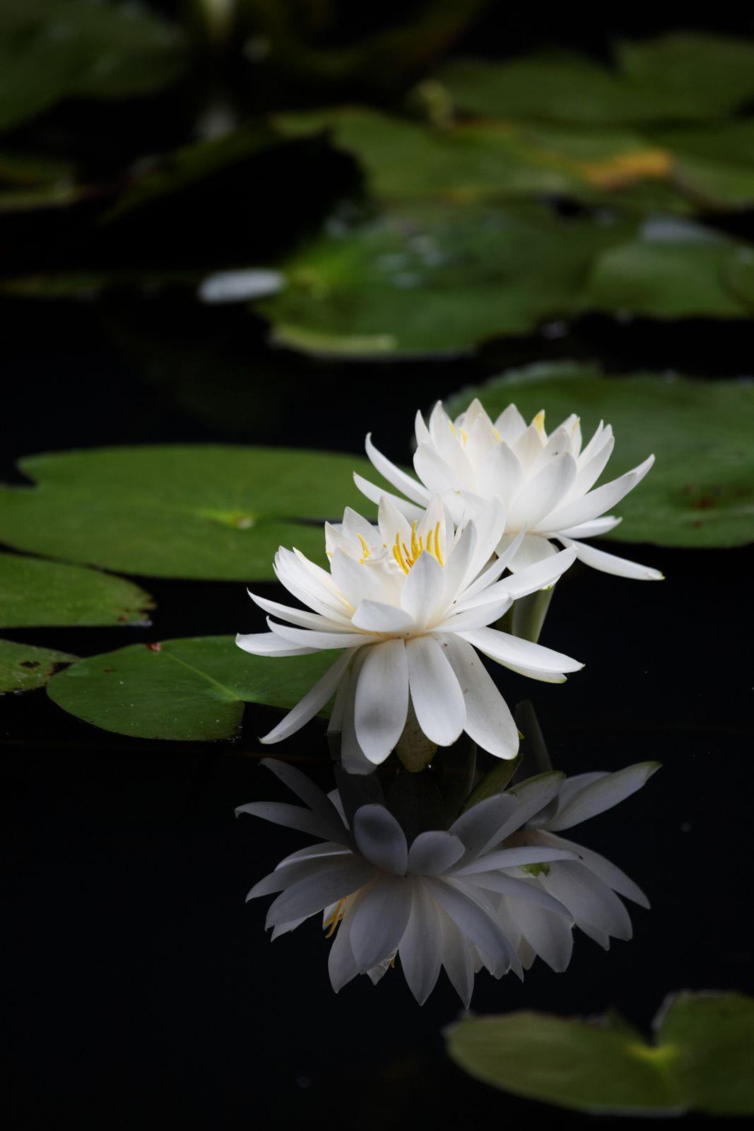 6 พฤษภาคม 2563 สอนสมาธิในวันวิสาขบูชา